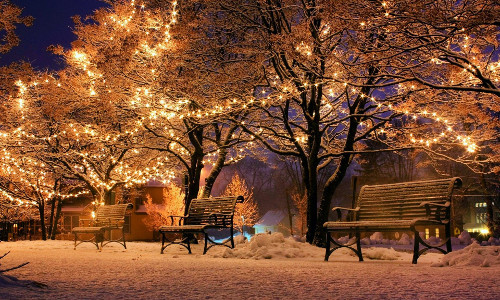 Christmas lights on trees in a snow-covered park.
